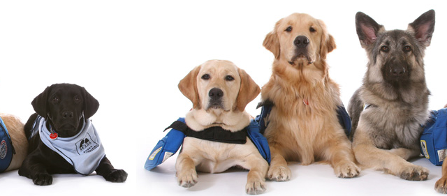 assistancedogs