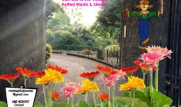 Bloom Fringe Ranelagh